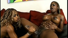 With their bodies all oiled up, two curvy black lesbians please each other's twats